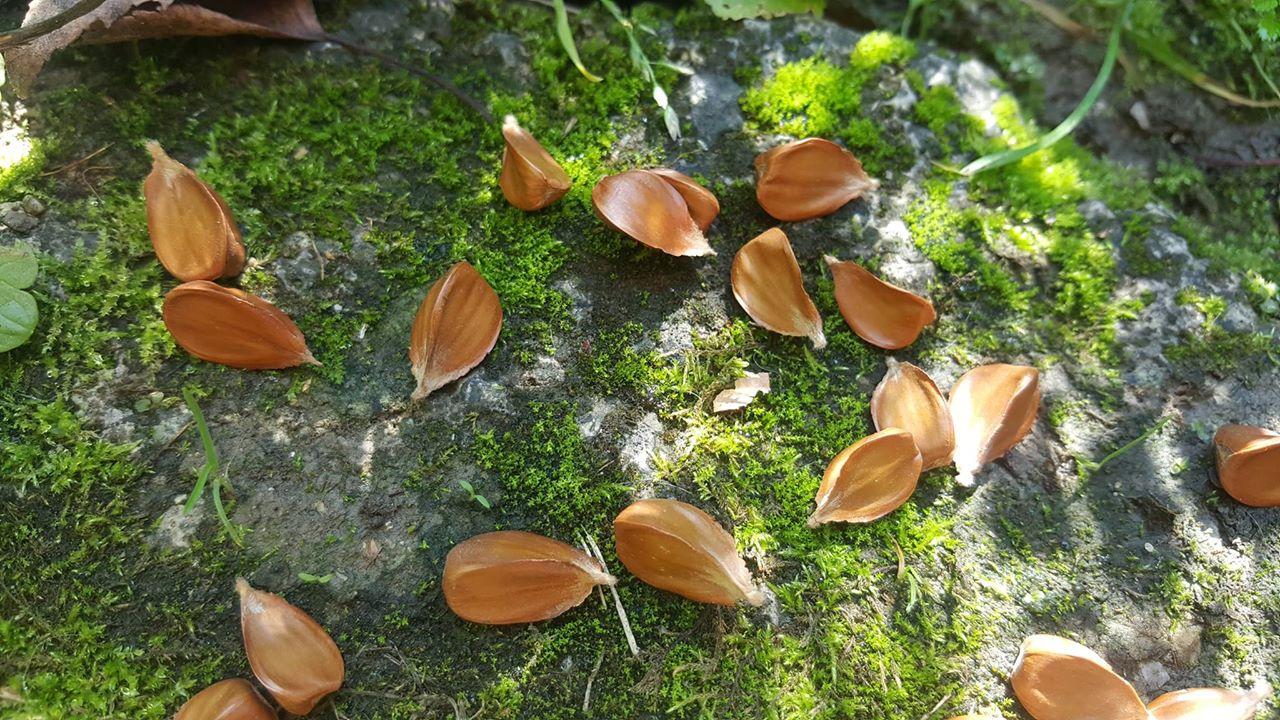 Poďte si nazbierať najchutnejšie lesné oriešky!