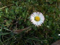 Jarná očista začína! Poďme sa najesť do prírody…